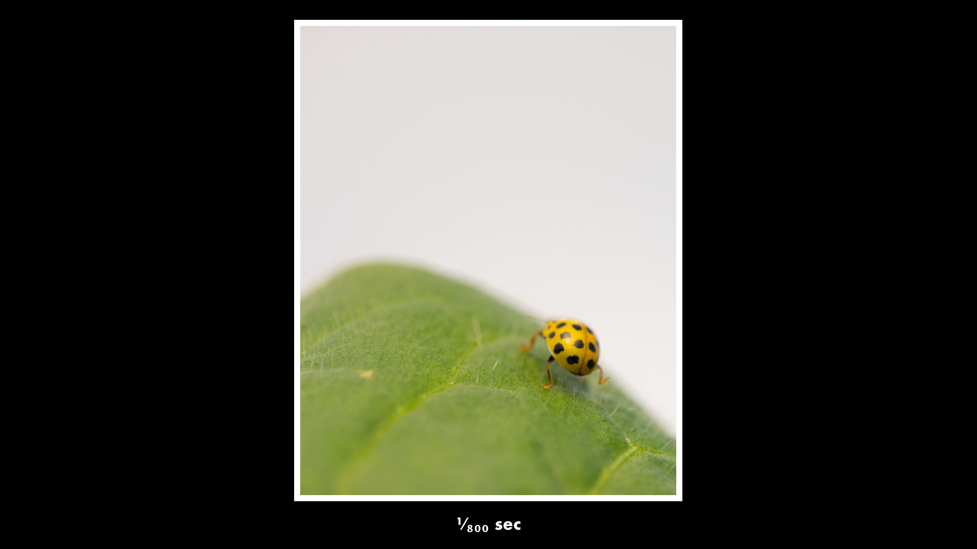 Macro Photography Tips For Beginners Digital Photography Review - Each of these macro bug photographs is made from thousands of individual images