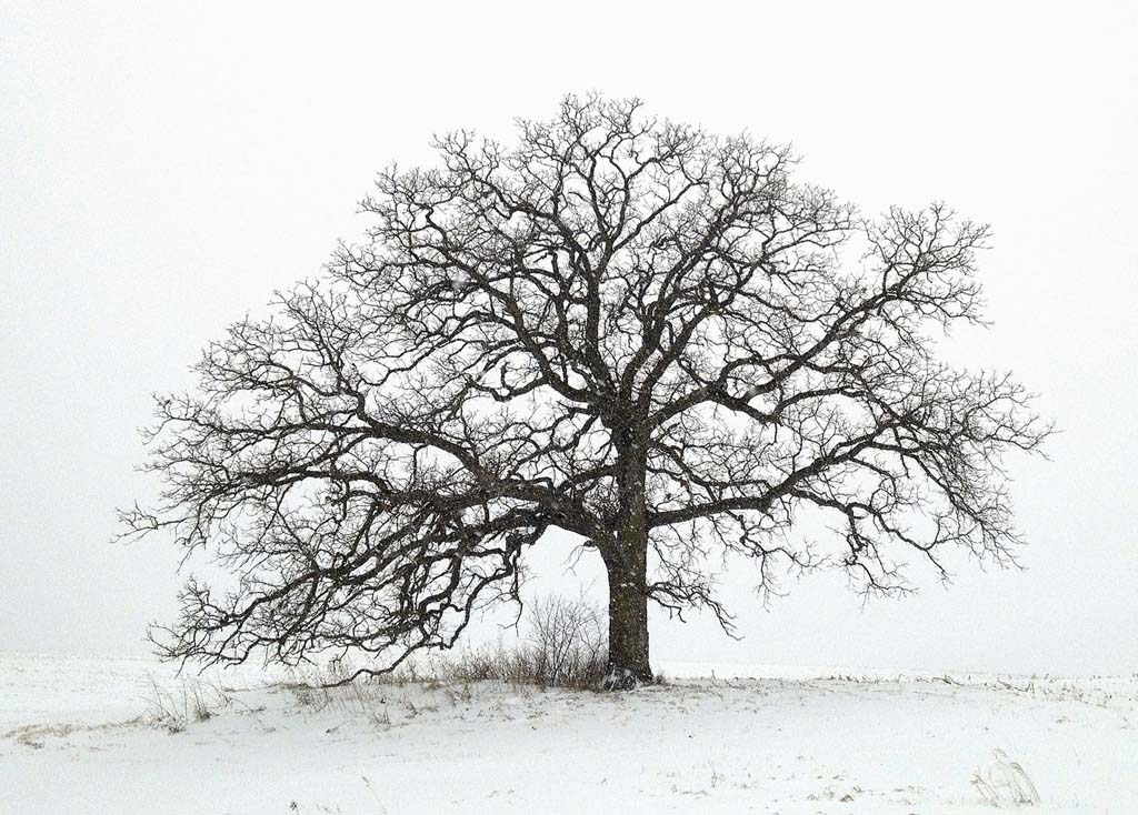 0747fbe49 Exposure: Mark Hirsch and 'that tree': Digital Photography Review