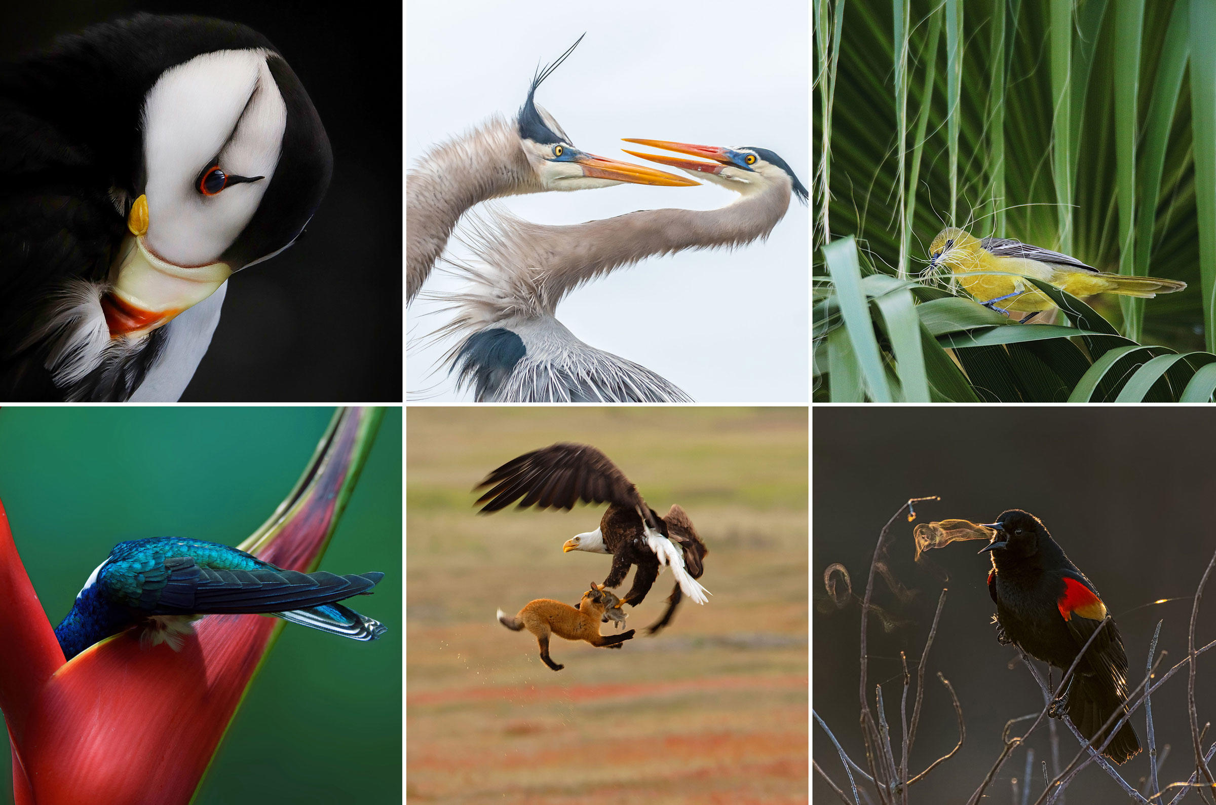 Slide Show Of Some Of My Bird Photos >> Slideshow The Winners Of The 2019 Audubon Photography