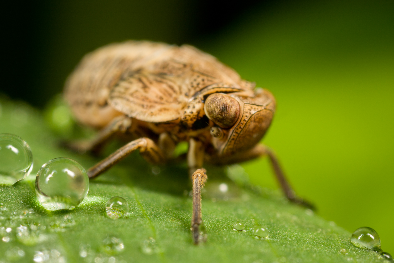 Depth Of Field In Macro Photography Digital Photography Review - Each of these macro bug photographs is made from thousands of individual images