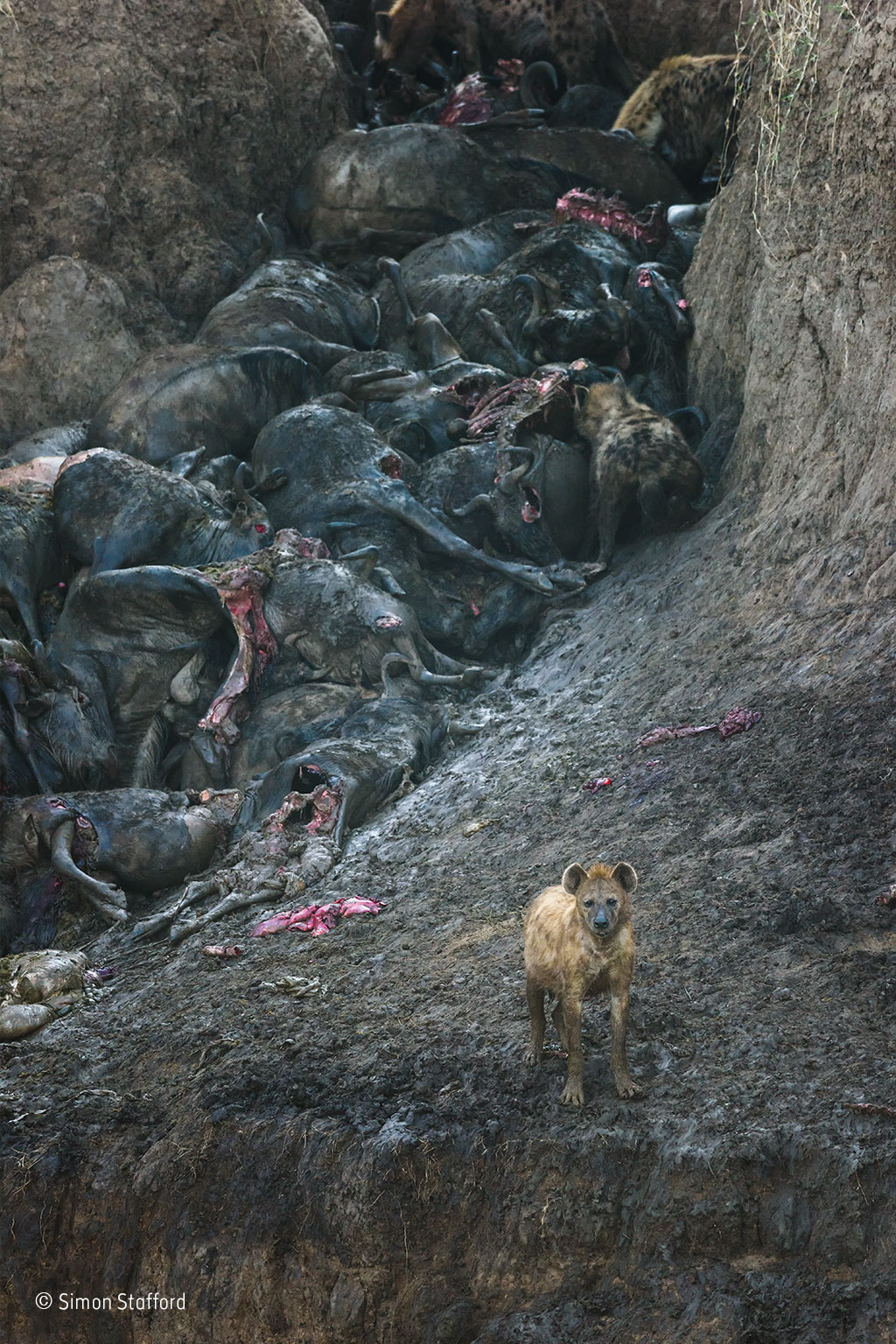 The aftermath, Simon Stafford, UK / Wildlife Photographer of the Year
