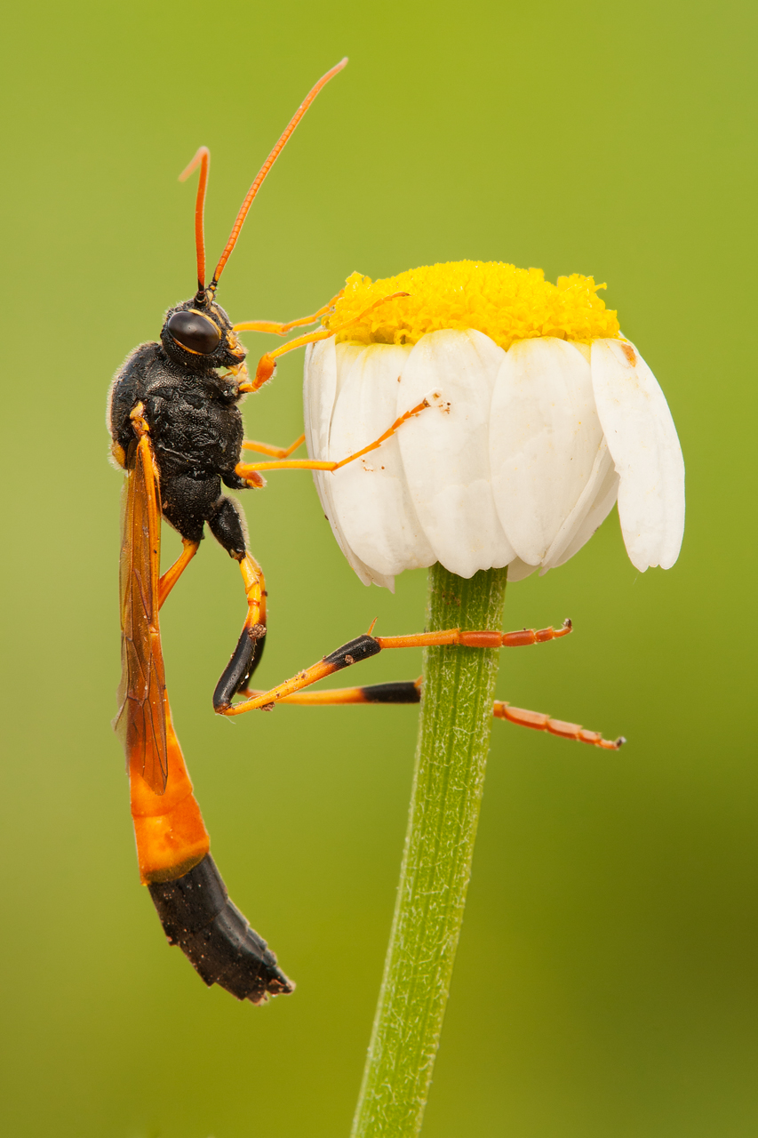 What we want in a macro shot – Background: Digital ...