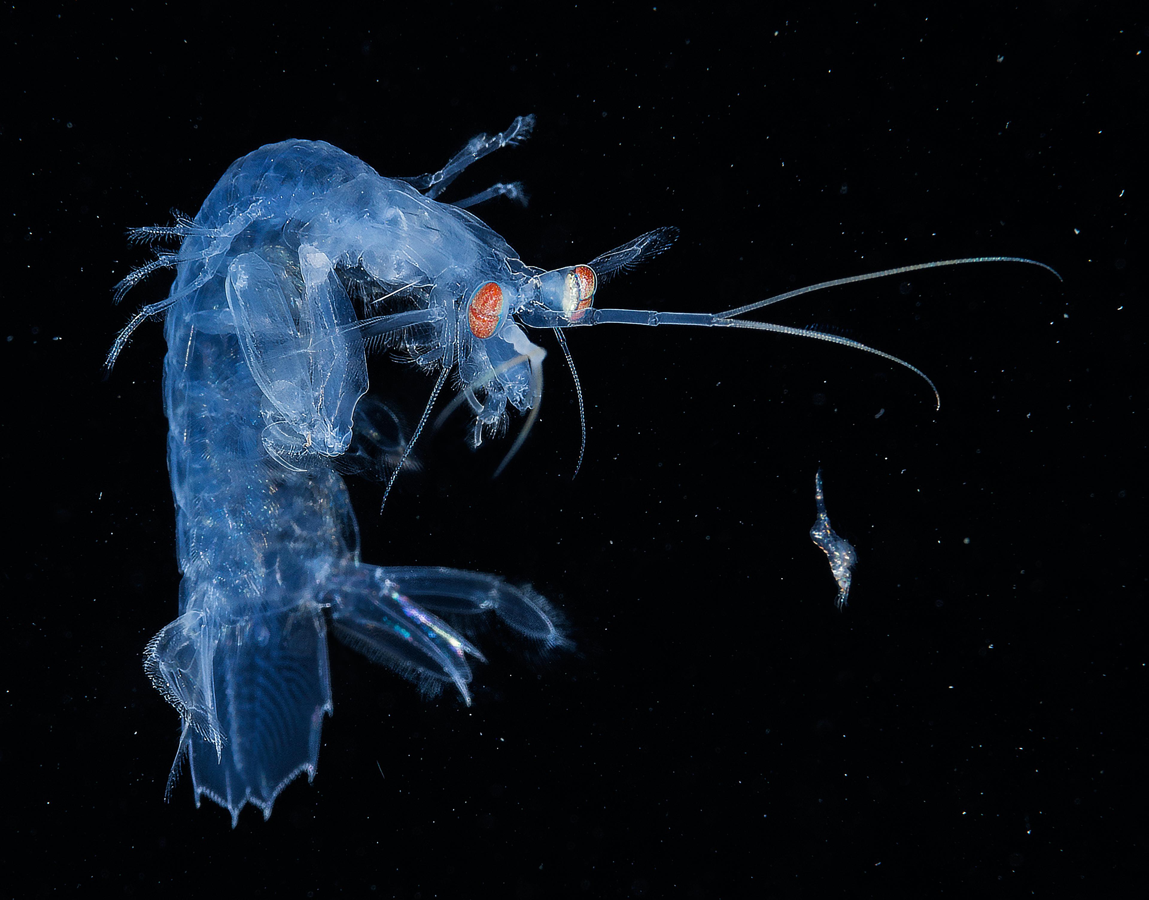 2017 Underwater Photographer of the Year: winning photos