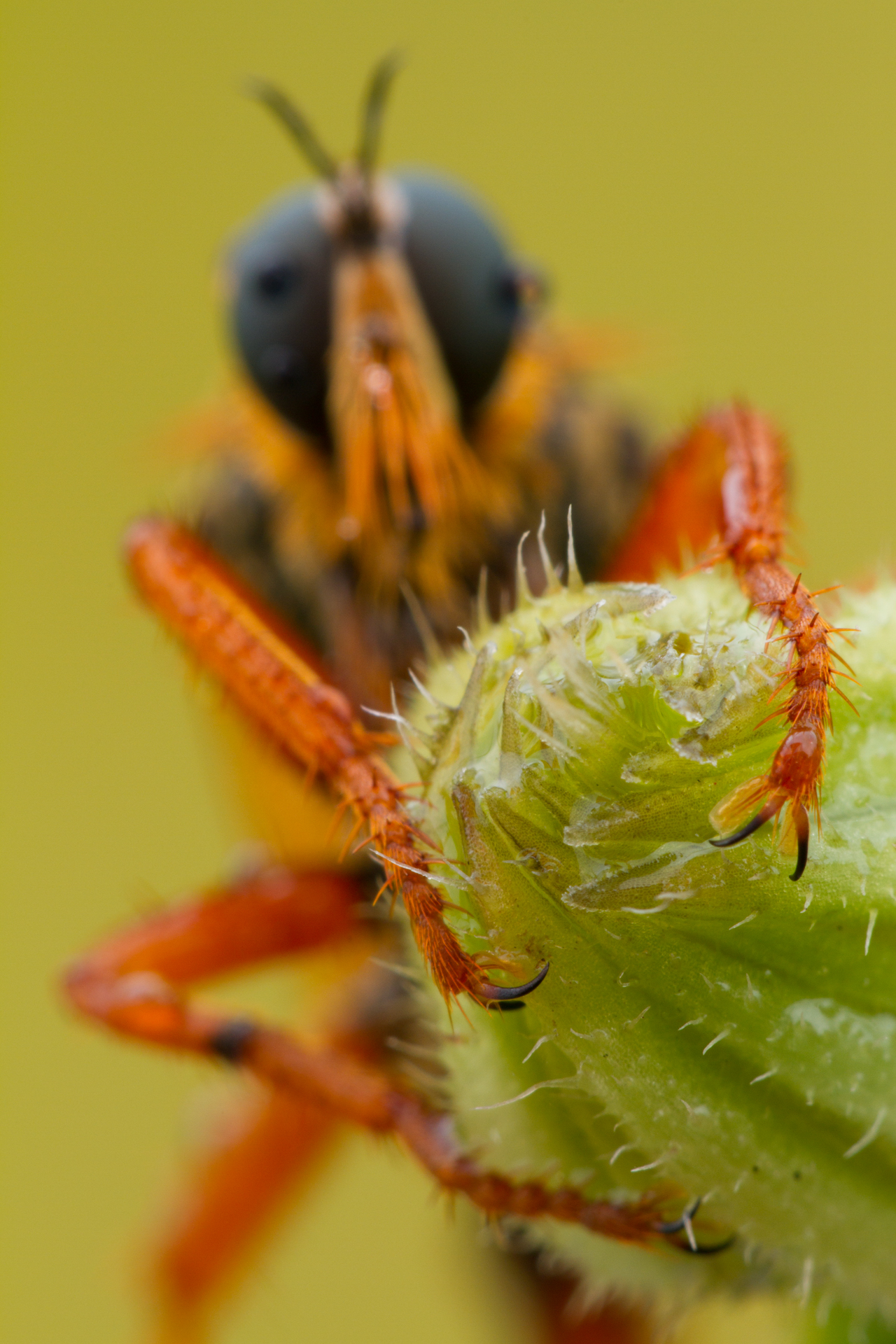 What we want in a macro shot - Detail: Digital Photography ...