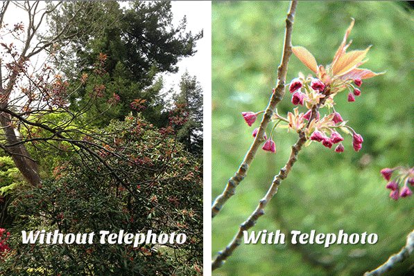 iPad Telephoto Lens will take close-ups with your tablet ...